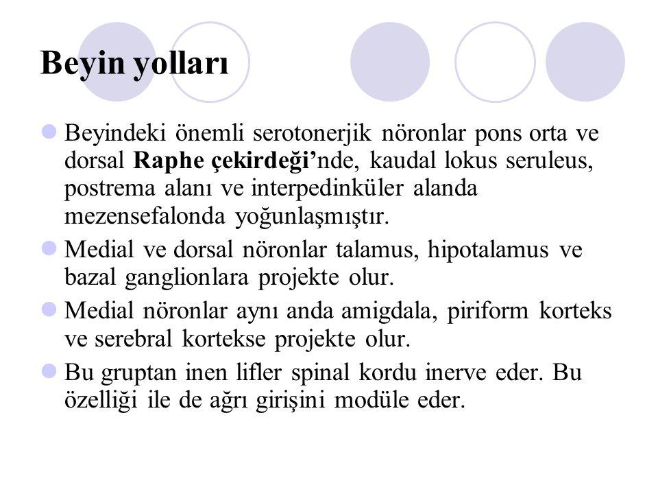 Beyin yolları Beyindeki önemli serotonerjik nöronlar pons orta ve dorsal Raphe çekirdeği'nde, kaudal lokus seruleus, postrema alanı ve interpedinküler