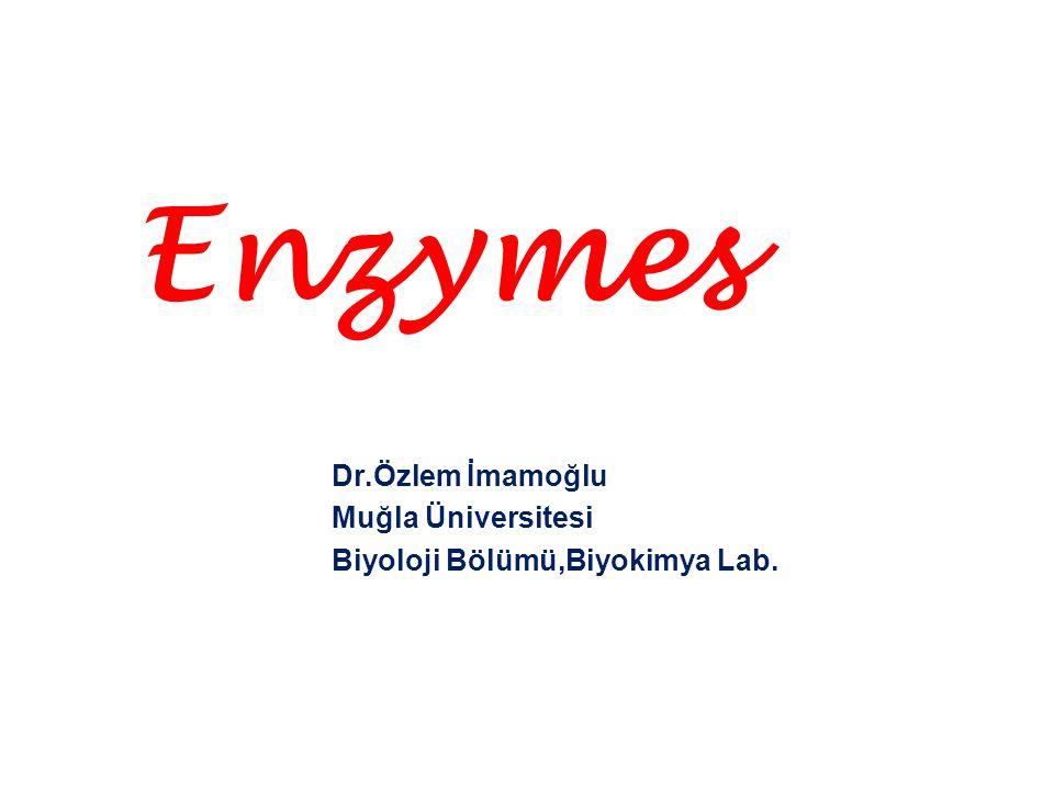 Enzymes Dr.Özlem İmamoğlu Muğla Üniversitesi Biyoloji Bölümü,Biyokimya Lab.