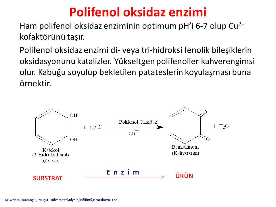 Polifenol oksidaz enzimi Ham polifenol oksidaz enziminin optimum pH'i 6-7 olup Cu 2+ kofaktörünü taşır. Polifenol oksidaz enzimi di- veya tri-hidroksi