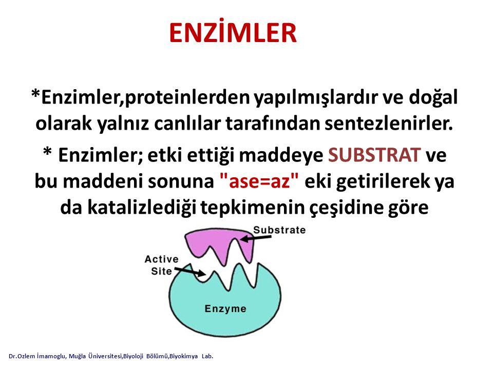 ENZİMLER *Enzimler,proteinlerden yapılmışlardır ve doğal olarak yalnız canlılar tarafından sentezlenirler. * Enzimler; etki ettiği maddeye SUBSTRAT ve