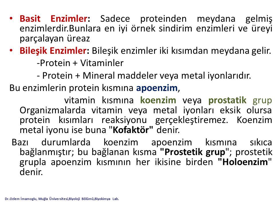 Basit Enzimler: Sadece proteinden meydana gelmiş enzimlerdir.Bunlara en iyi örnek sindirim enzimleri ve üreyi parçalayan üreaz Bileşik Enzimler: Bileş