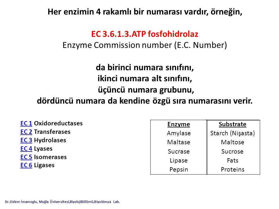 Her enzimin 4 rakamlı bir numarası vardır, örneğin, EC 3.6.1.3.ATP fosfohidrolaz Enzyme Commission number (E.C. Number) da birinci numara sınıfını, ik