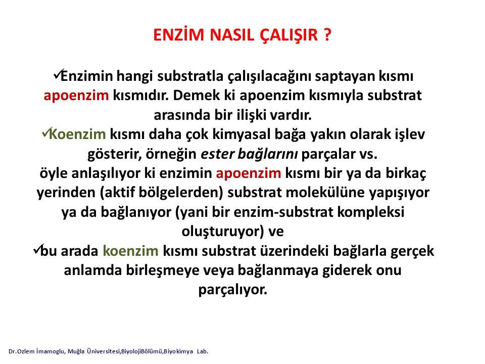 How Enzymes Work Dr.Ozlem İmamoglu, Muğla Üniversitesi,BiyolojiBölümü,Biyokimya Lab.