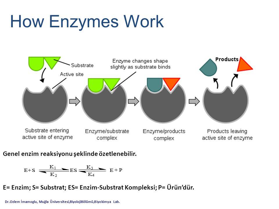 How Enzymes Work Dr.Ozlem İmamoglu, Muğla Üniversitesi,BiyolojiBölümü,Biyokimya Lab. Genel enzim reaksiyonu şeklinde özetlenebilir. E= Enzim; S= Subst