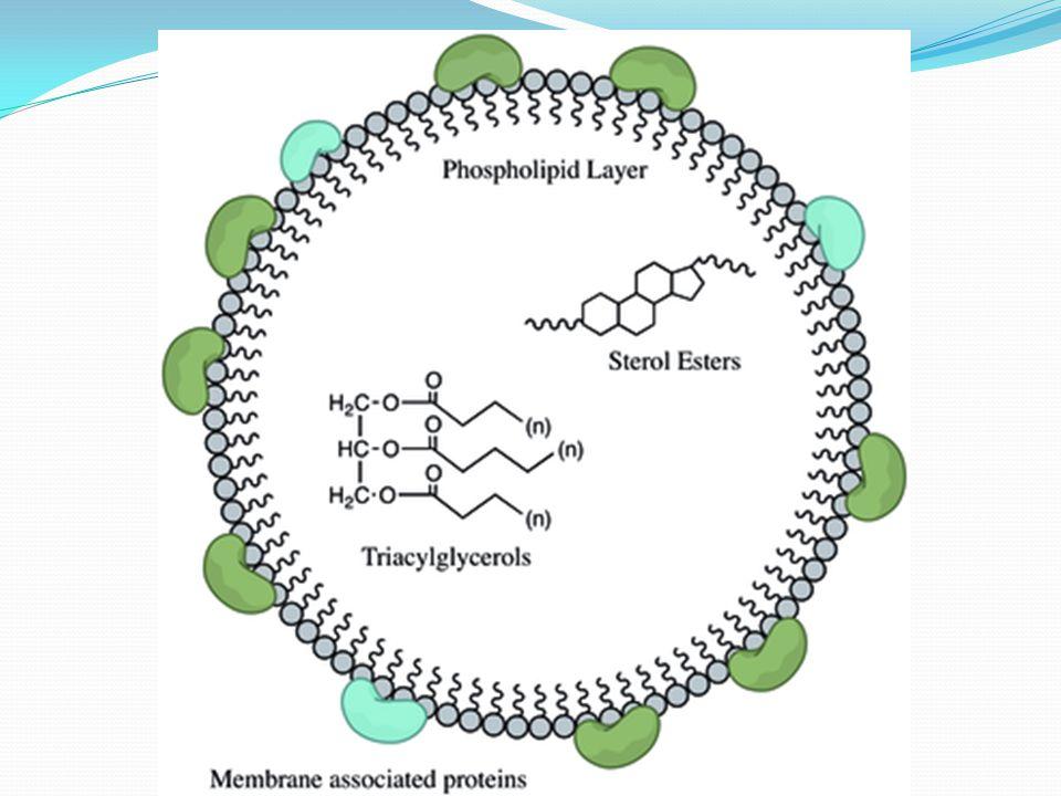 Yağda çözünen vitaminlerin kanda taşınması Yağ ve proteinlerin karışımından oluşan yapılar (lipoproteinler) önemli hücresel yapılardır. Bu yapılar kan