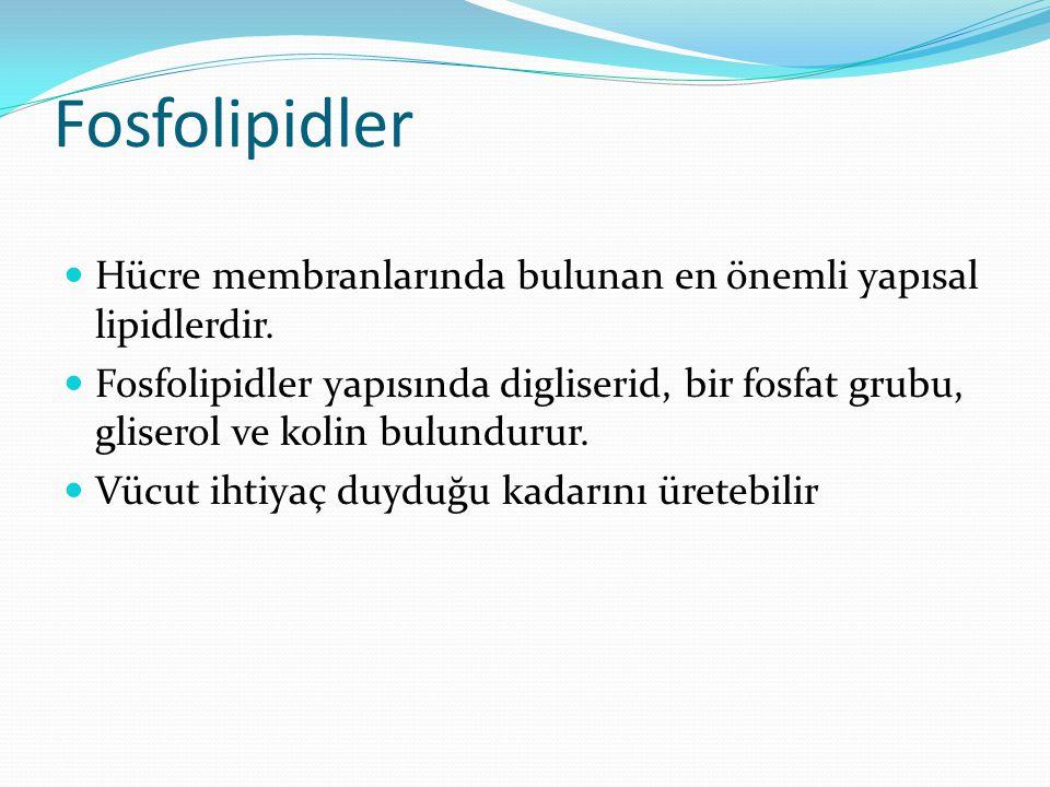 Fosfolipidler Hücre membranlarında bulunan en önemli yapısal lipidlerdir.
