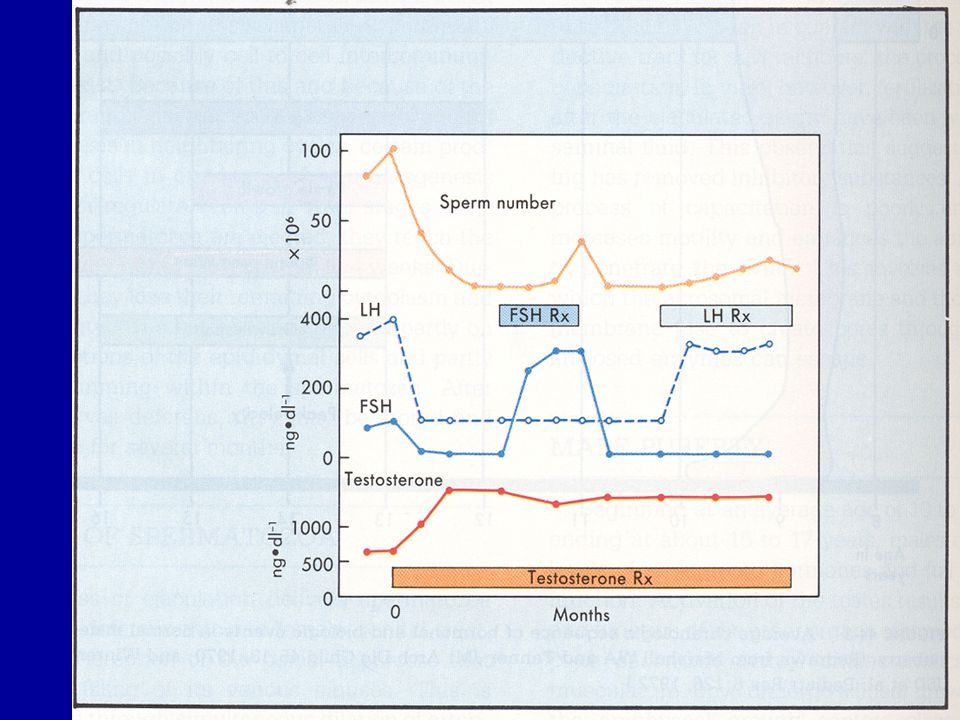 Cinsel farklılaşma TESTİS Testosteron Dihidrotestosteron 5  redüktaz Hedef hücre Testosteron Gonadotropinlerin düzenlenmesi Spermatogenez Wolf kanalının uyarılması Erkek dış genital organlarının oluşumu Pubertede cinsel olgunlaşma LH Testosteronun etkileri