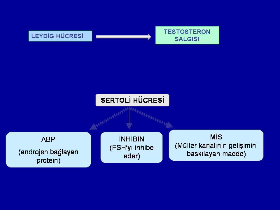 Testosteronun sentezi: Kolesterol desmolaz Pregnenalon 17  hidroksilaz 17-OH Pregnenalon 17-20 iyaz Dehidroepiandrosteron 3-  hidroksisteroid Androstendion dehidrojenaz 17-  hidroksisteroid Testosteron dehidrojenaz 5  redüktaz (hedef doku) Dihidrotestosteron LH Kolesterol %95 Testis kaynaklı (Leydig hücrelerden) %5 sürrenal kaynaklı