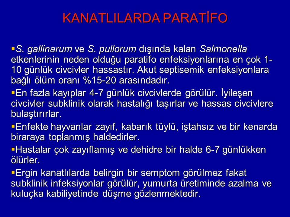 KANATLILARDA PARATİFO  S.gallinarum ve S.