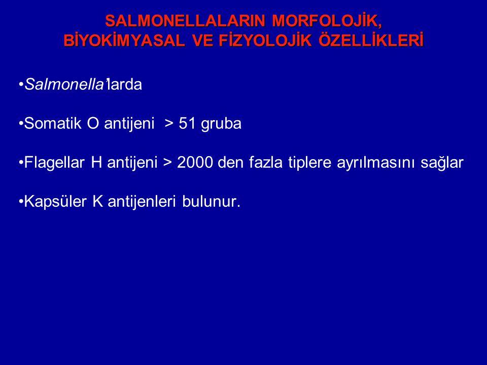 SALMONELLALARIN MORFOLOJİK, BİYOKİMYASAL VE FİZYOLOJİK ÖZELLİKLERİ Salmonella'larda Somatik O antijeni > 51 gruba Flagellar H antijeni > 2000 den fazla tiplere ayrılmasını sağlar Kapsüler K antijenleri bulunur.
