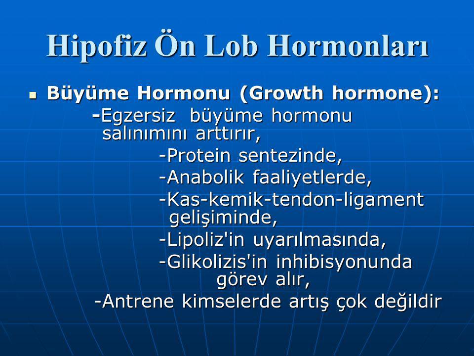 Hipofiz Ön Lob Hormonları Büyüme Hormonu (Growth hormone): Büyüme Hormonu (Growth hormone): -Egzersiz büyüme hormonu salınımını arttırır, -Egzersiz büyüme hormonu salınımını arttırır, -Protein sentezinde, -Protein sentezinde, -Anabolik faaliyetlerde, -Anabolik faaliyetlerde, -Kas-kemik-tendon-ligament gelişiminde, -Kas-kemik-tendon-ligament gelişiminde, -Lipoliz in uyarılmasında, -Lipoliz in uyarılmasında, -Glikolizis in inhibisyonunda görev alır, -Glikolizis in inhibisyonunda görev alır, -Antrene kimselerde artış çok değildir -Antrene kimselerde artış çok değildir