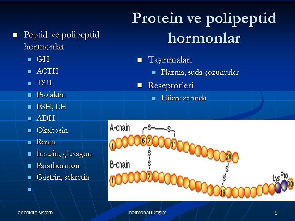 endokrin sistem 9hormonal iletişim Protein ve polipeptid hormonlar Peptid ve polipeptid hormonlar Peptid ve polipeptid hormonlar GH GH ACTH ACTH TSH TSH Prolaktin Prolaktin FSH, LH FSH, LH ADH ADH Oksitosin Oksitosin Renin Renin İnsulin, glukagon İnsulin, glukagon Parathormon Parathormon Gastrin, sekretin Gastrin, sekretin Taşınmaları Taşınmaları Plazma, suda çözünürler Plazma, suda çözünürler Reseptörleri Reseptörleri Hücre zarında Hücre zarında