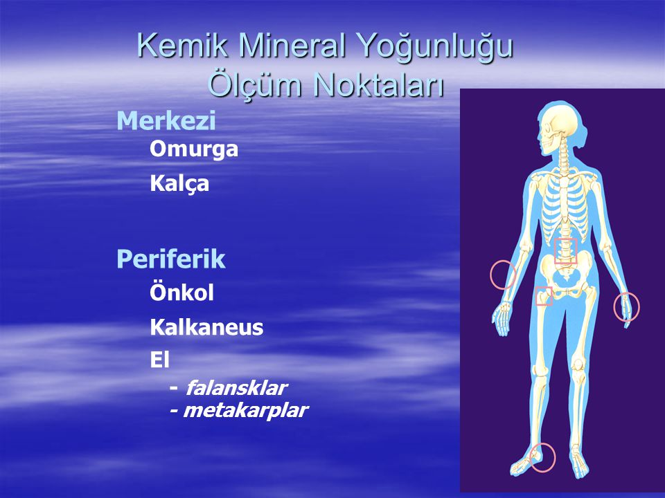 Kemik Mineral Yoğunluğu Ölçüm Noktaları Periferik Omurga Kalça Merkezi Önkol Kalkaneus El - falansklar - metakarplar