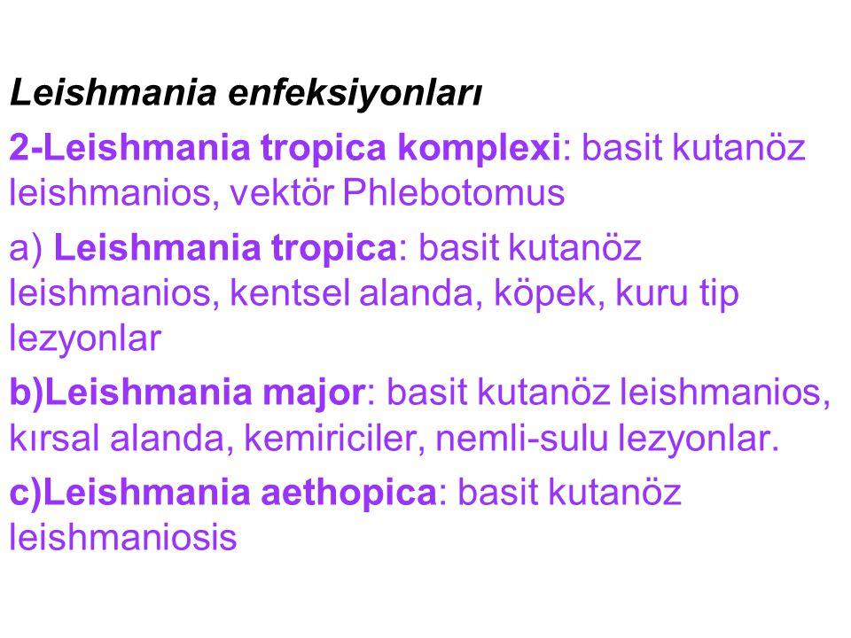 Leishmania enfeksiyonları 2-Leishmania tropica komplexi: basit kutanöz leishmanios, vektör Phlebotomus a) Leishmania tropica: basit kutanöz leishmanio
