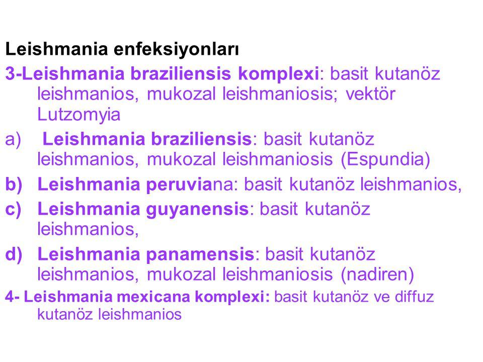Leishmania enfeksiyonları 3-Leishmania braziliensis komplexi: basit kutanöz leishmanios, mukozal leishmaniosis; vektör Lutzomyia a) Leishmania brazili