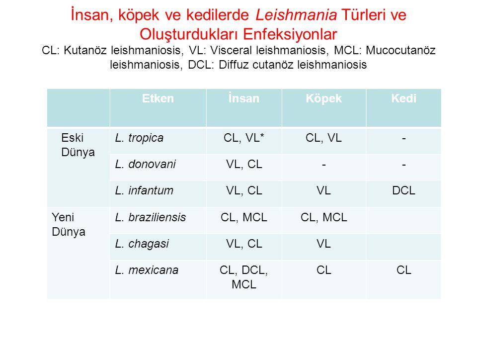 İnsan, köpek ve kedilerde Leishmania Türleri ve Oluşturdukları Enfeksiyonlar CL: Kutanöz leishmaniosis, VL: Visceral leishmaniosis, MCL: Mucocutanöz l