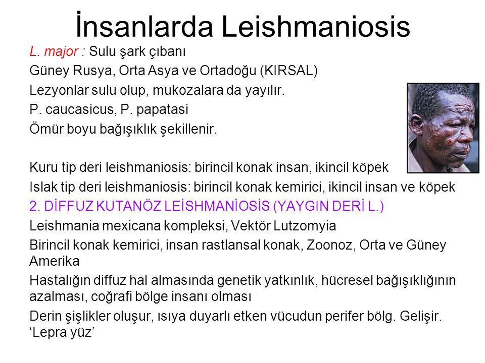 İnsanlarda Leishmaniosis L. major : Sulu şark çıbanı Güney Rusya, Orta Asya ve Ortadoğu (KIRSAL) Lezyonlar sulu olup, mukozalara da yayılır. P. caucas