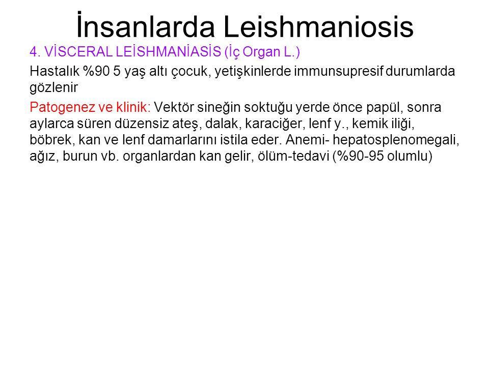 İnsanlarda Leishmaniosis 4. VİSCERAL LEİSHMANİASİS (İç Organ L.) Hastalık %90 5 yaş altı çocuk, yetişkinlerde immunsupresif durumlarda gözlenir Patoge