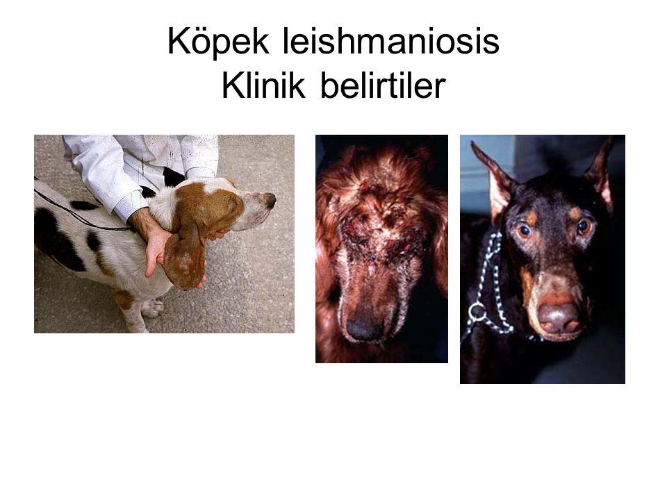 Köpek leishmaniosis Klinik belirtiler
