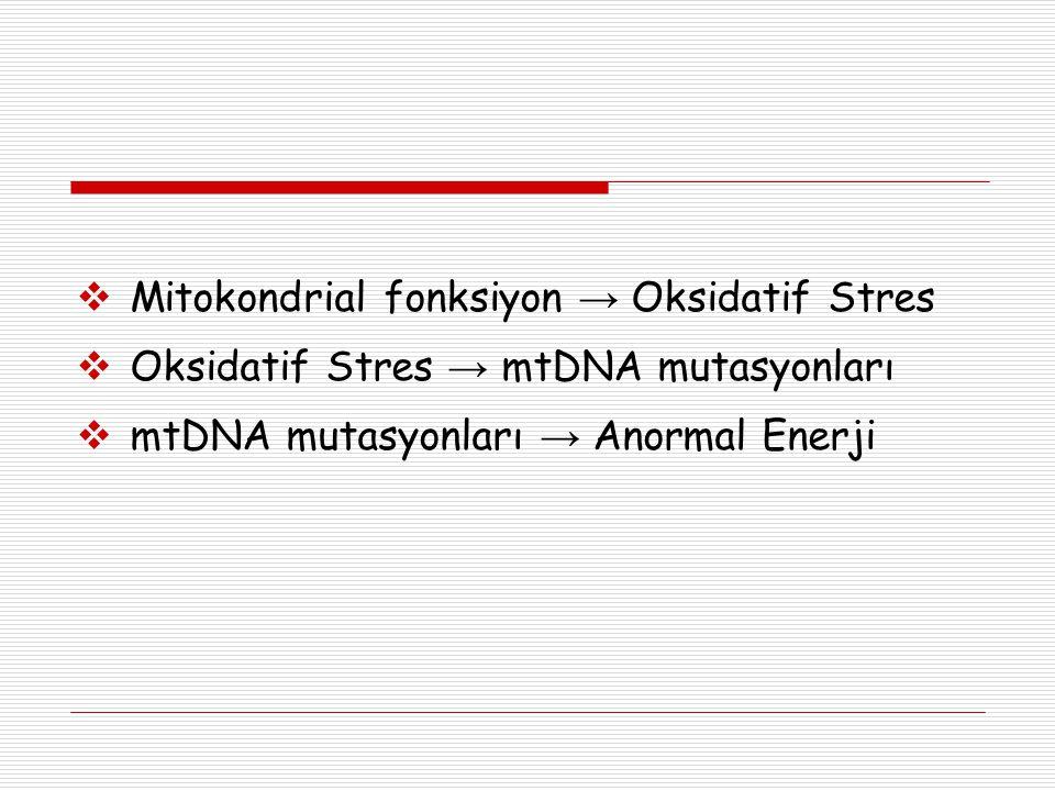 Mitokondrial fonksiyon → Oksidatif Stres  Oksidatif Stres → mtDNA mutasyonları  mtDNA mutasyonları → Anormal Enerji