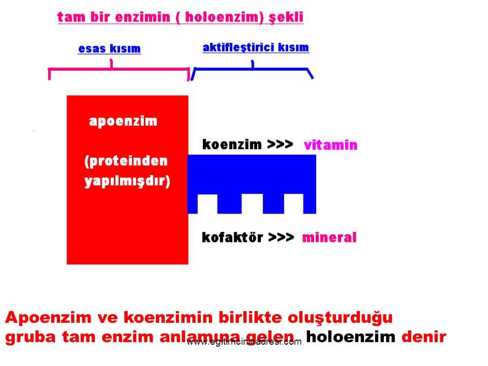 Apoenzim ve koenzimin birlikte oluşturduğu gruba tam enzim anlamına gelen holoenzim denir