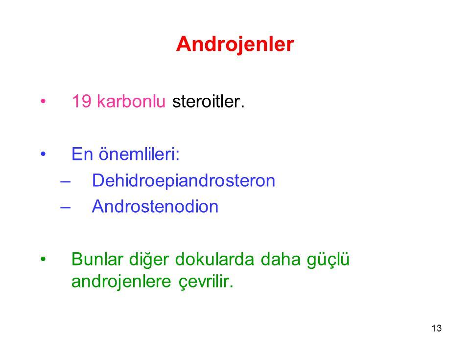 Androjenler 19 karbonlu steroitler. En önemlileri: –Dehidroepiandrosteron –Androstenodion Bunlar diğer dokularda daha güçlü androjenlere çevrilir. 13