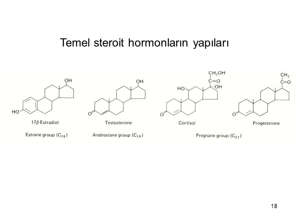 Temel steroit hormonların yapıları 18