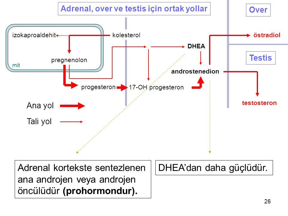 pregnenolon progesteron DHEA androstenedion testosteron Testis Over östradiolizokaproaldehit 17-OH progesteron Adrenal, over ve testis için ortak yoll