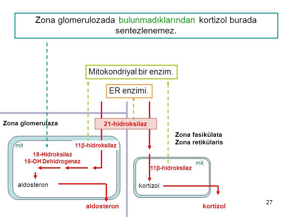 Zona glomerulaza Zona fasikülata Zona retikülaris aldosteronkortizol aldosteron 11β-hidroksilaz kortizol 21-hidroksilaz mit ER enzimi. Mitokondriyal b