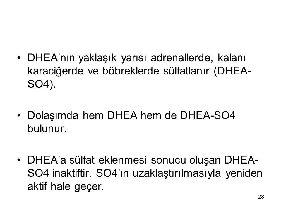 DHEA'nın yaklaşık yarısı adrenallerde, kalanı karaciğerde ve böbreklerde sülfatlanır (DHEA- SO4). Dolaşımda hem DHEA hem de DHEA-SO4 bulunur. DHEA'a s