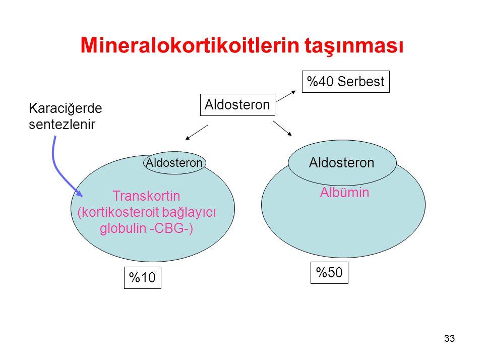 Mineralokortikoitlerin taşınması Aldosteron Transkortin (kortikosteroit bağlayıcı globulin -CBG-) Aldosteron Albümin %50 %10 Aldosteron %40 Serbest Ka