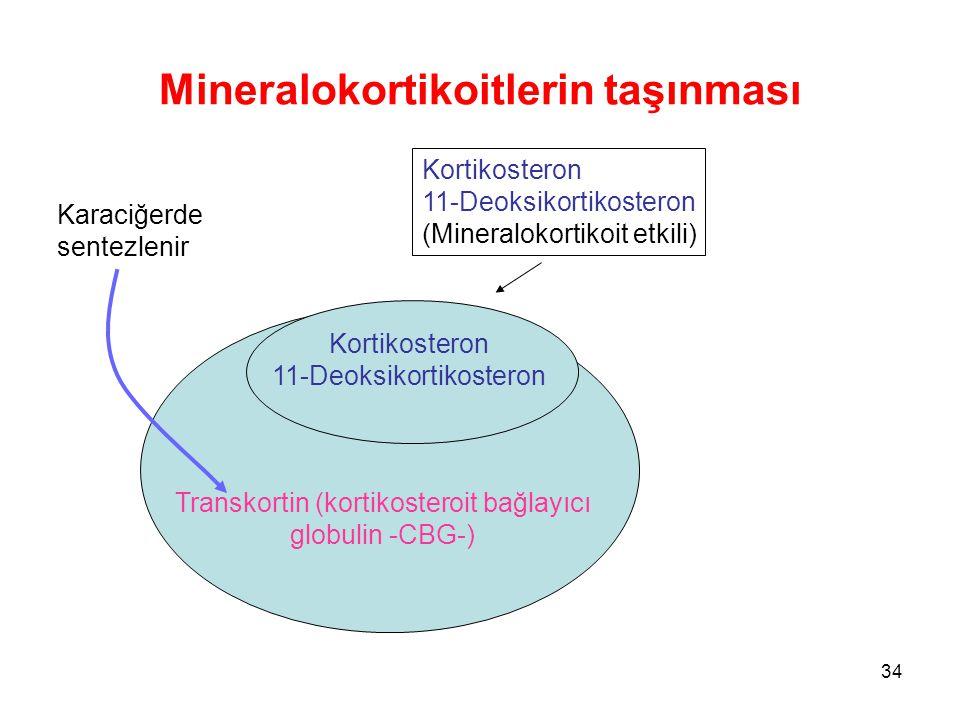 Mineralokortikoitlerin taşınması Transkortin (kortikosteroit bağlayıcı globulin -CBG-) Kortikosteron 11-Deoksikortikosteron (Mineralokortikoit etkili)