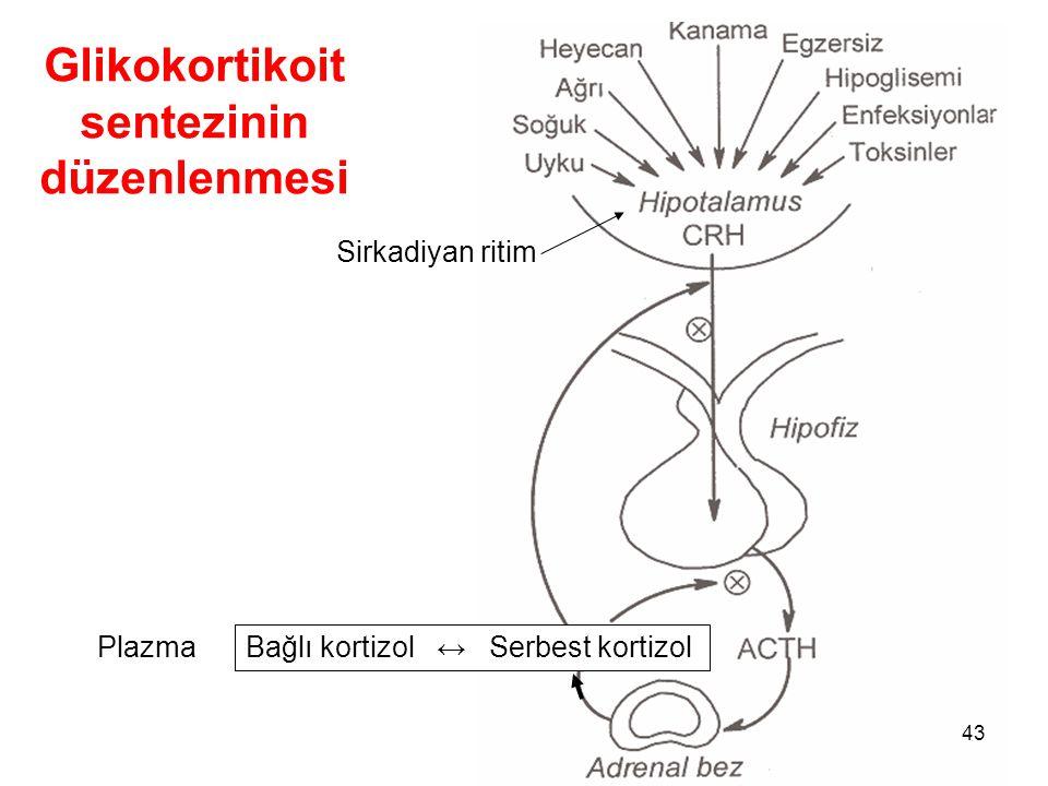Glikokortikoit sentezinin düzenlenmesi Bağlı kortizol ↔ Serbest kortizol Sirkadiyan ritim Plazma 43