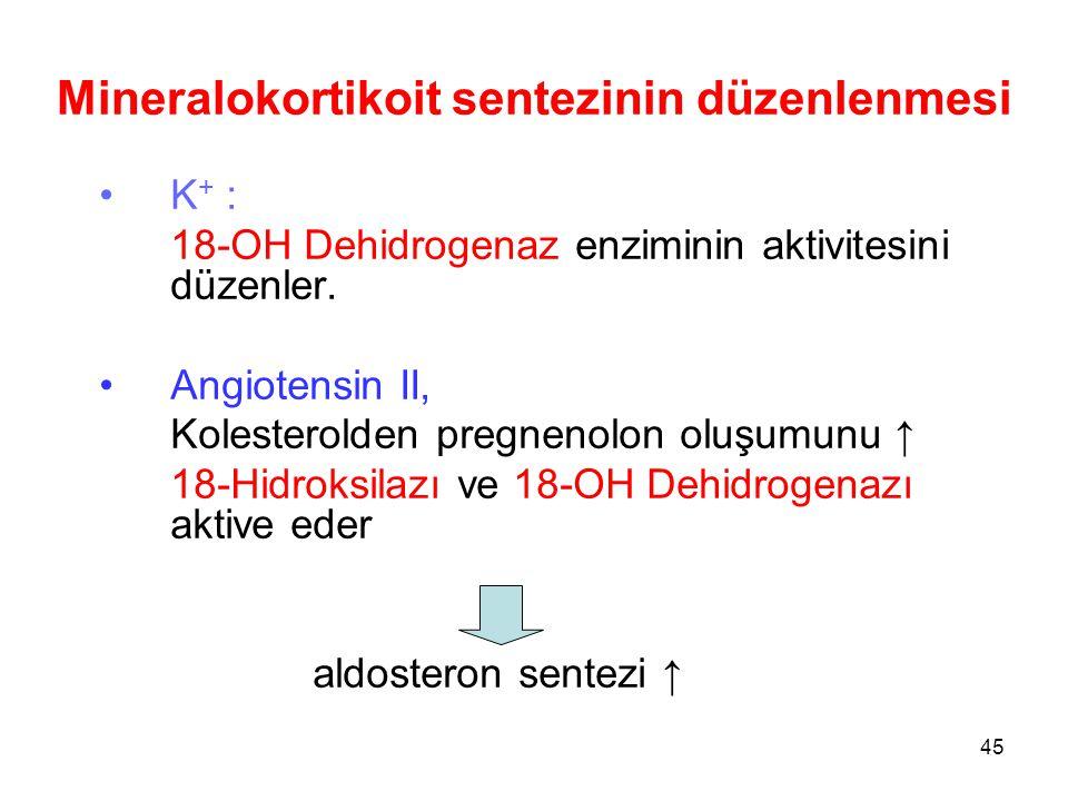 K + : 18-OH Dehidrogenaz enziminin aktivitesini düzenler. Angiotensin II, Kolesterolden pregnenolon oluşumunu ↑ 18-Hidroksilazı ve 18-OH Dehidrogenazı