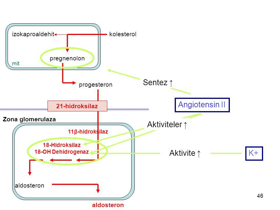 pregnenolon progesteron Zona glomerulaza aldosteron izokaproaldehit aldosteron 11β-hidroksilaz 21-hidroksilaz mit kolesterol 18-Hidroksilaz 18-OH Dehi