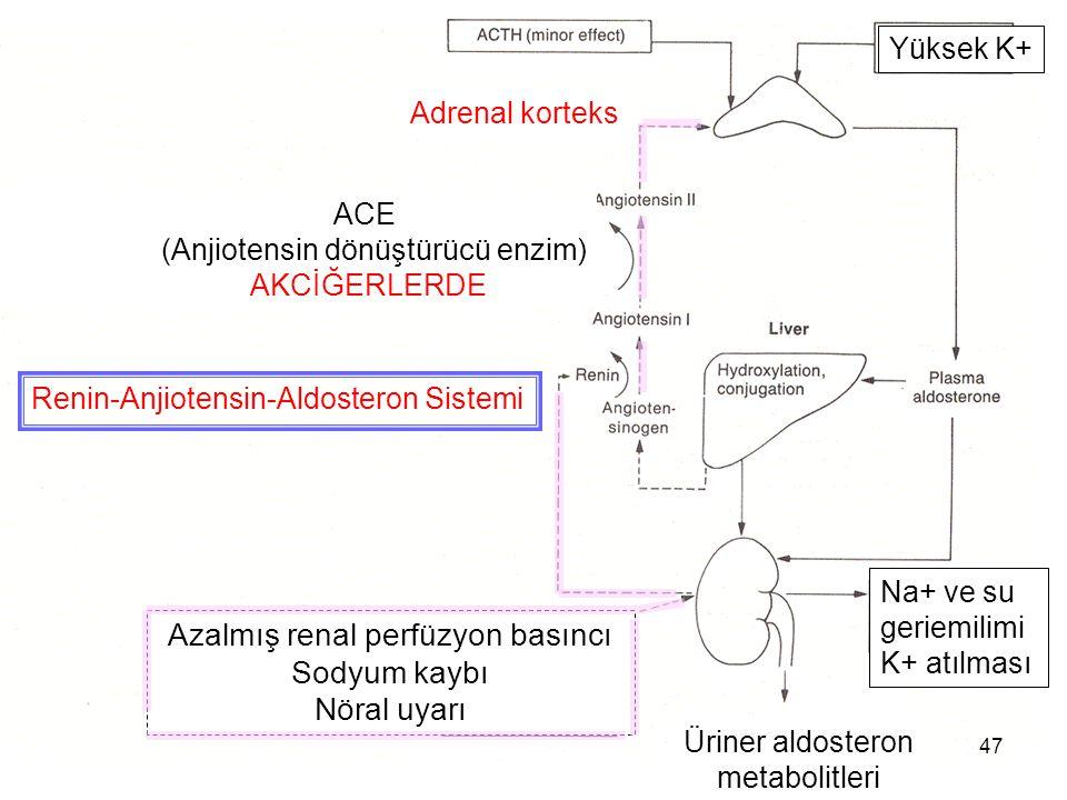 ACE (Anjiotensin dönüştürücü enzim) AKCİĞERLERDE Adrenal korteks Azalmış renal perfüzyon basıncı Sodyum kaybı Nöral uyarı Üriner aldosteron metabolitl
