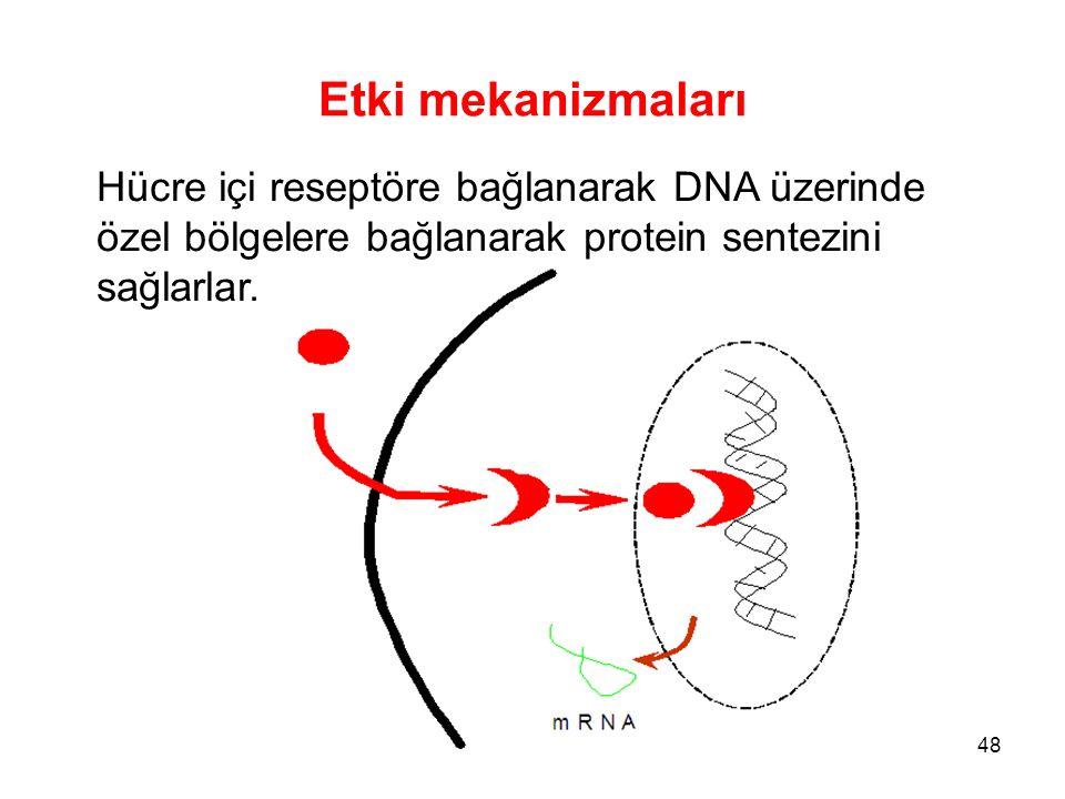 Etki mekanizmaları Hücre içi reseptöre bağlanarak DNA üzerinde özel bölgelere bağlanarak protein sentezini sağlarlar. 48