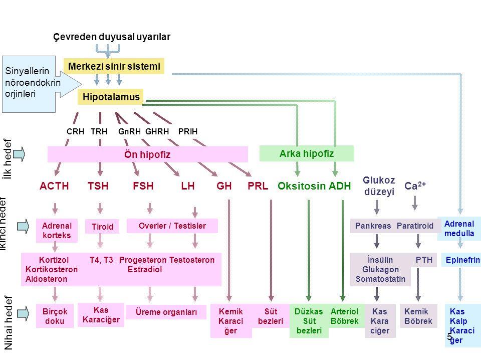 İlk hedef İkinci hedef Nihai hedef Çevreden duyusal uyarılar Merkezi sinir sistemi Hipotalamus Ön hipofiz Arka hipofiz ACTH TSH FSH LH GH PRL Oksitosi