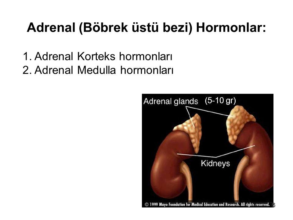 Adrenal (Böbrek üstü bezi) Hormonlar: 1. Adrenal Korteks hormonları 2. Adrenal Medulla hormonları (5-10 gr) 6
