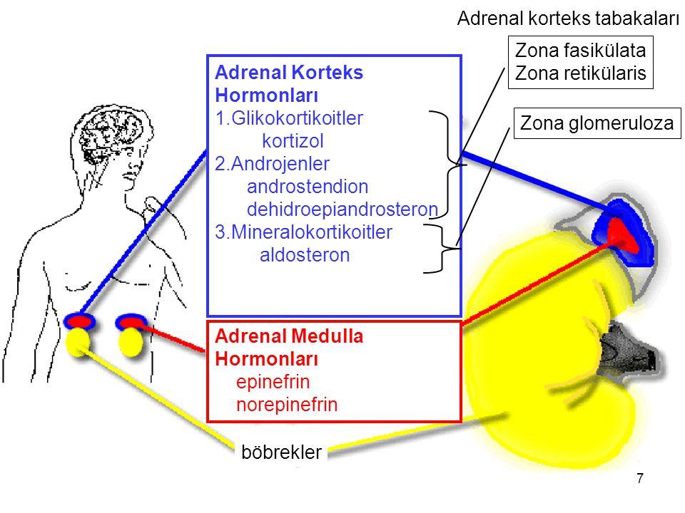 Adrenal Korteks Hormonları 1.Glikokortikoitler kortizol 2.Androjenler androstendion dehidroepiandrosteron 3.Mineralokortikoitler aldosteron Adrenal Me