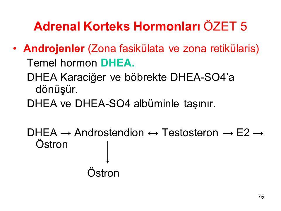 Adrenal Korteks Hormonları ÖZET 5 Androjenler (Zona fasikülata ve zona retikülaris) Temel hormon DHEA. DHEA Karaciğer ve böbrekte DHEA-SO4'a dönüşür.