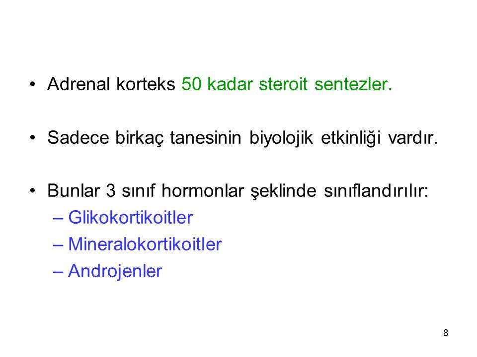 SENTEZLERİ 19