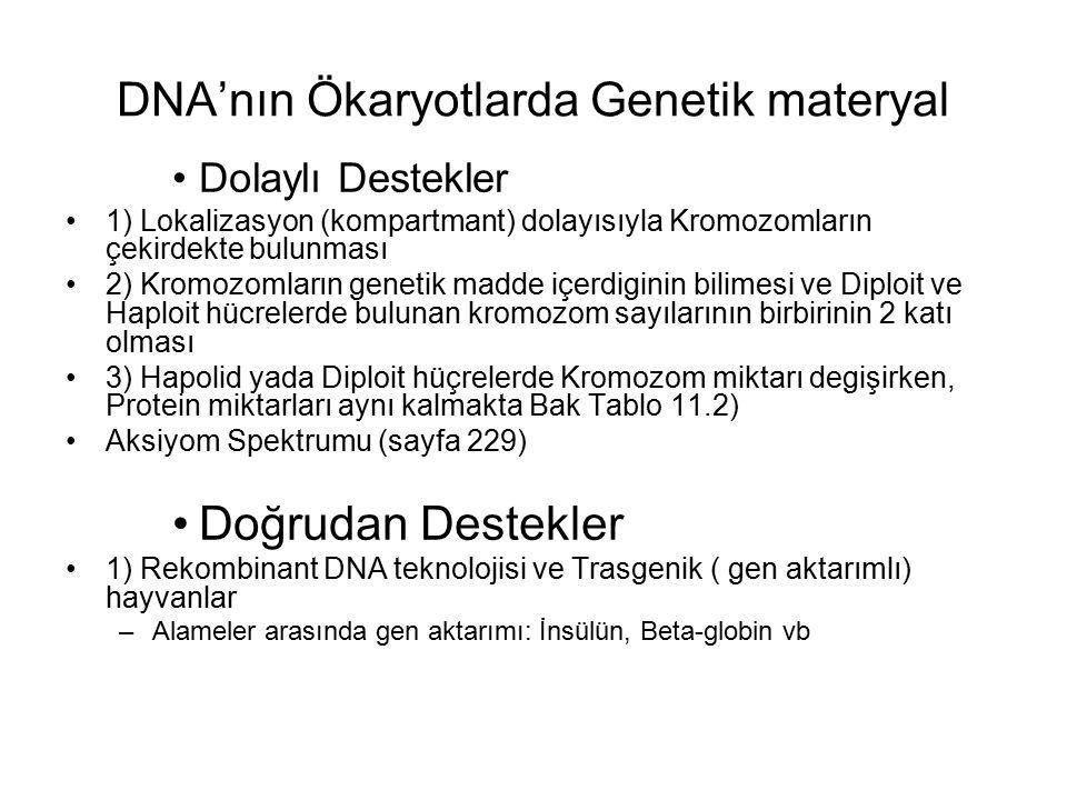 DNA'nın Ökaryotlarda Genetik materyal Dolaylı Destekler 1) Lokalizasyon (kompartmant) dolayısıyla Kromozomların çekirdekte bulunması 2) Kromozomların