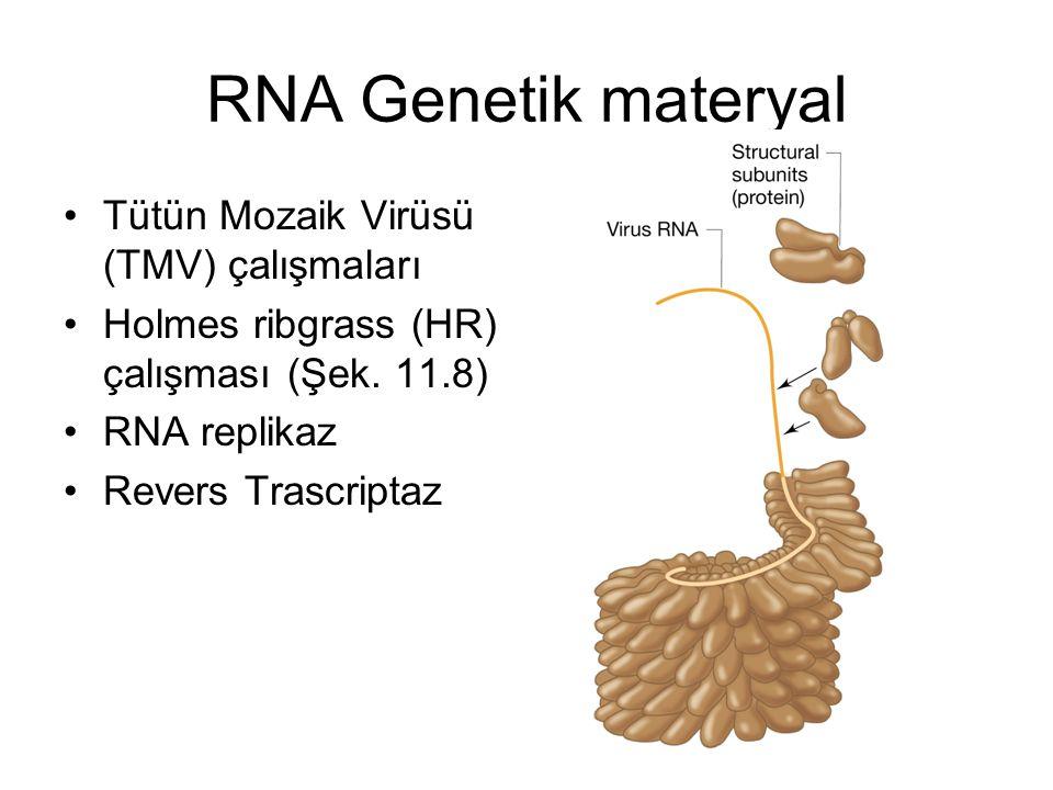 RNA Genetik materyal Tütün Mozaik Virüsü (TMV) çalışmaları Holmes ribgrass (HR) çalışması (Şek. 11.8) RNA replikaz Revers Trascriptaz