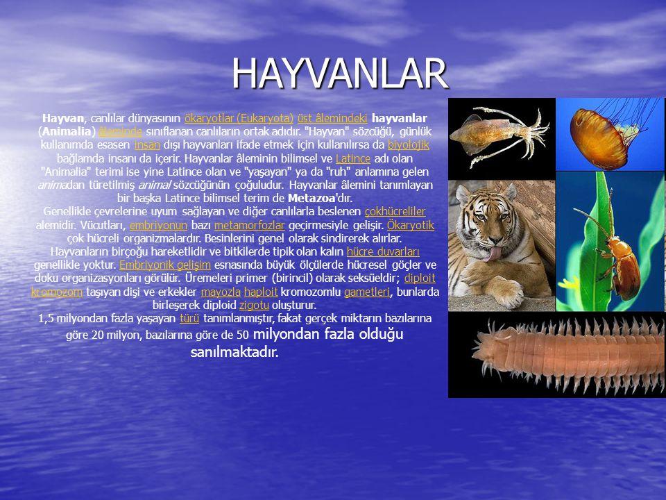 HAYVANLAR HAYVANLAR Hayvan, canlılar dünyasının ökaryotlar (Eukaryota) üst âlemindeki hayvanlar (Animalia) âleminde sınıflanan canlıların ortak adıdır