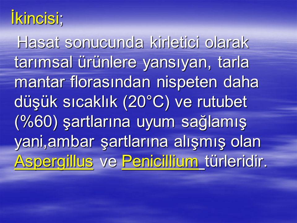Üçüncüsü; Üçüncüsü; Depolama koşullarının,mantarların üreyebileceği şartlar yönünde değişmesiyle ortaya çıkan ve Fusarium, Popullaspora, Aspergillus türlerinin içinde yer aldığı gruptur.