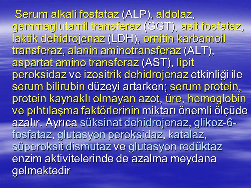 Serum alkali fosfataz (ALP), aldolaz, gammaglutamil transferaz (GGT), asit fosfataz, laktik dehidrojenaz (LDH), ornitin karbamoil transferaz, alanin a