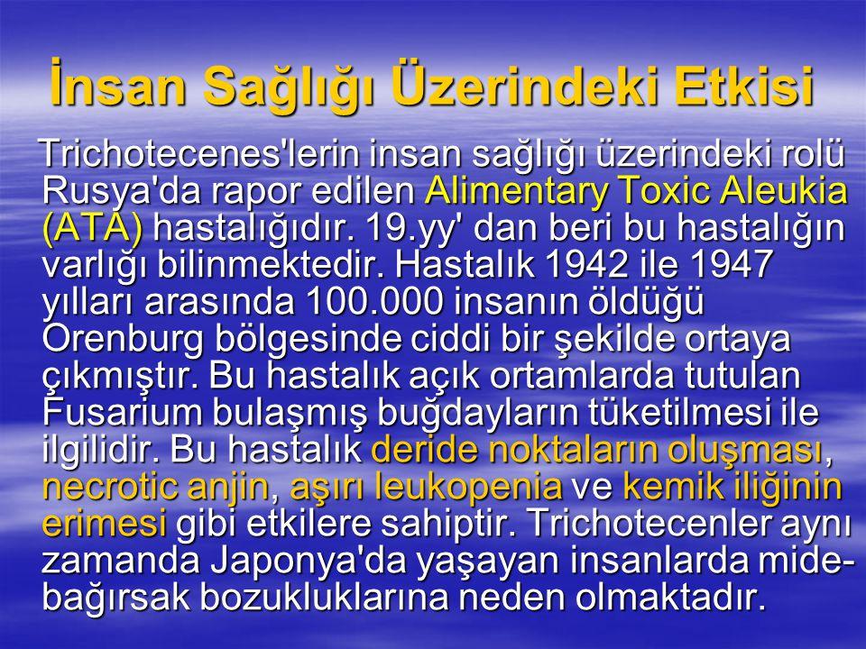 Zearalenon Zearalenon üreten türler : Zearalenon üreten türler : Fusarium culmorum, Fusarium culmorum, F.