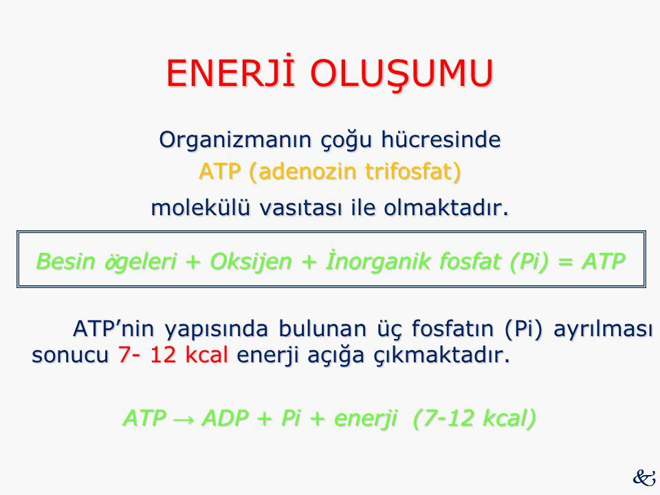ENERJİ OLUŞUMU Organizmanın çoğu hücresinde ATP (adenozin trifosfat) molekülü vasıtası ile olmaktadır. Besin ö geleri + Oksijen + İnorganik fosfat (Pi