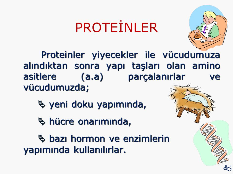 PROTEİNLER Proteinler yiyecekler ile vücudumuza alındıktan sonra yapı taşları olan amino asitlere (a.a) parçalanırlar ve vücudumuzda;  yeni doku yapı